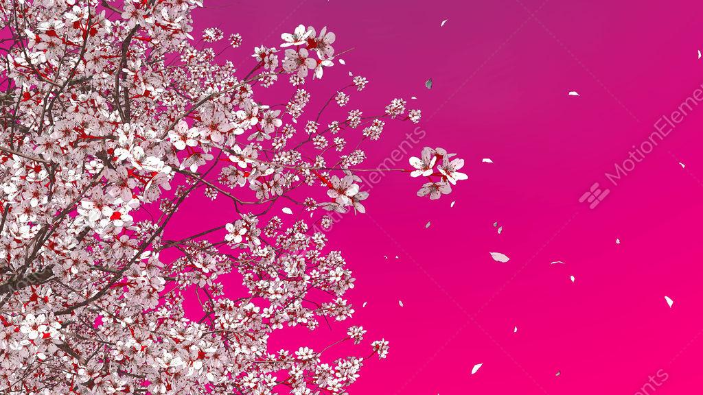 cherry blossom petals gif